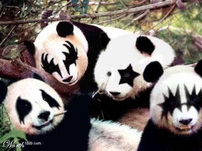 panda-kiss_qjgenth