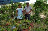 Productores de viveros de Lázaro Cárdenas luchan por fuentes de comercialización