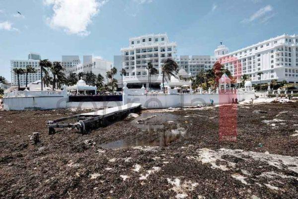 """Toneladas de sargazo recalan en playas de Cancún tras paso de huracán  """"Grace"""" – El Punto Sobre La i"""
