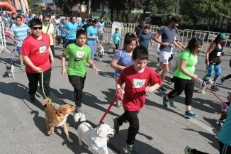 cani running 05