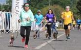cani running 06