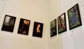 """De acuerdo con la responsable de la exhibición, """"tanto individual como en conjunto, las fotografías destacan principalmente elementos en su medio natural."""