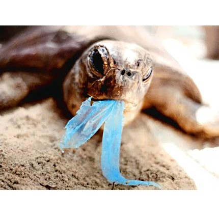 It is estimated there are several millions of plastic bags scattered in the 361 million square kilometers of oceans, with one or two each hectare. This is a major problem as turtles and other animals confound them with food.