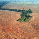 Deforestation of the Amazon hits new low
