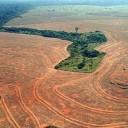 deforestation-amazon-rainforest