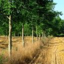 Agroforestry in France
