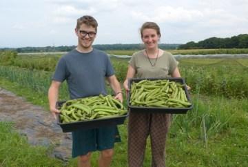 Freshly picked beans