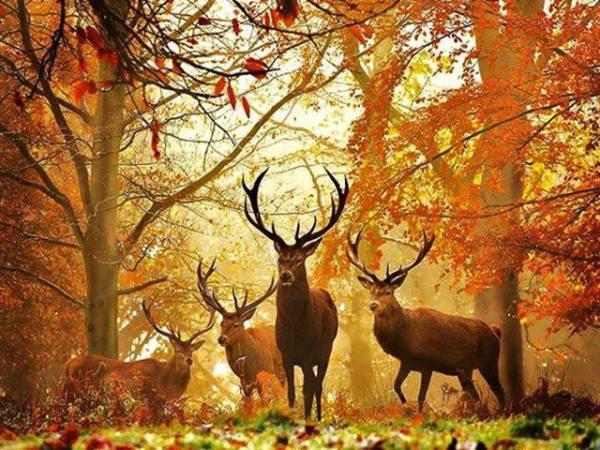 El ciervo se caracteriza por sus elegantes y delicados movimientos.