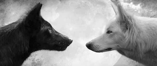 La Historia de Dos Lobos