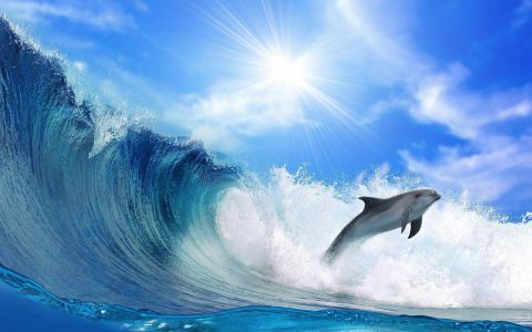 6819082-dolphin-wallpaper