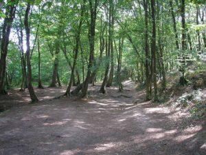 bosque para meditar