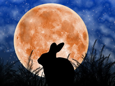 conejo luna