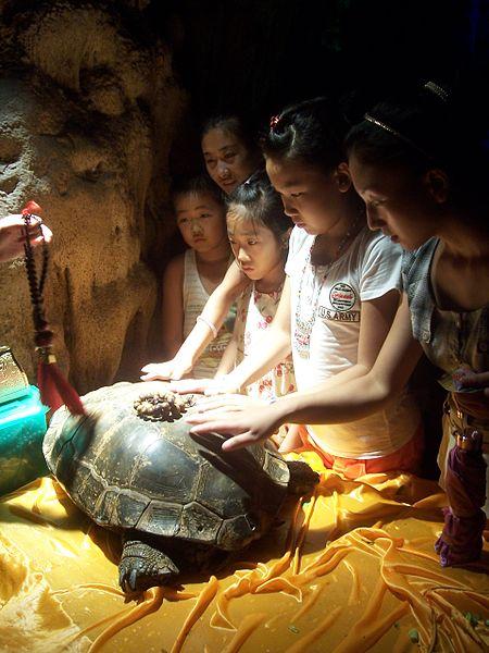 Tortuga sagrada en china