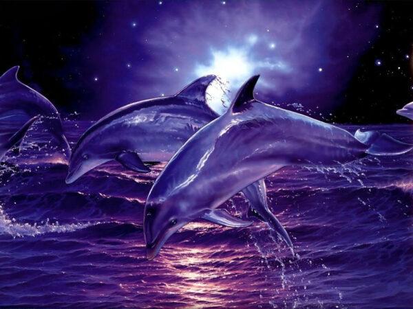 Meditación con el Aliento del Delfín