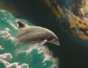 delfines-768x600