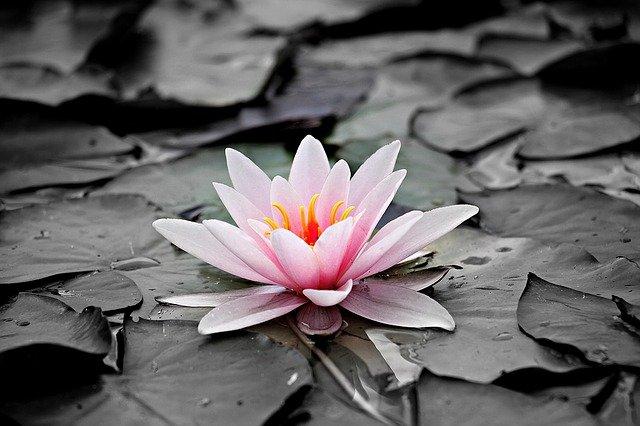 Meditación Contemplativa: El Mágico Encanto de la Flor.