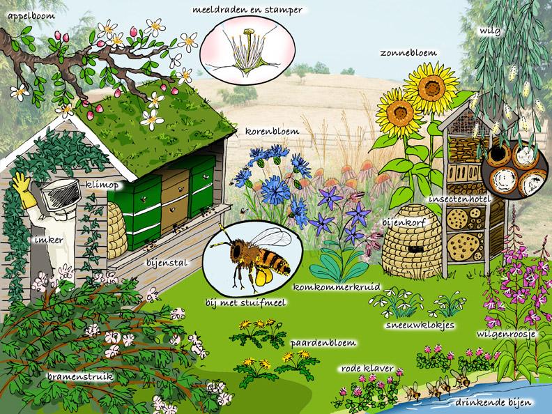 natuurplaat honingbij
