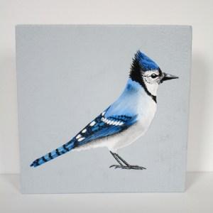 blauwe gaai, vogel op hout