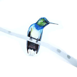 kolibrie op takje