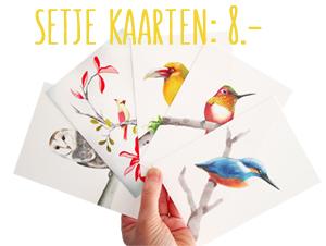 setje vogelkaarten