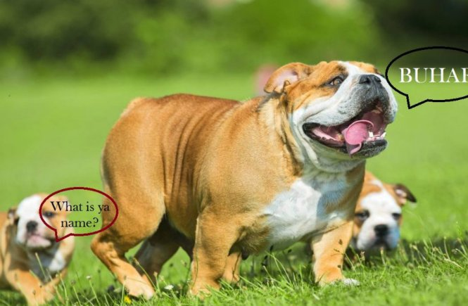 A Dog Named Buhari and A Hippo Named Patience - elsieisy blog