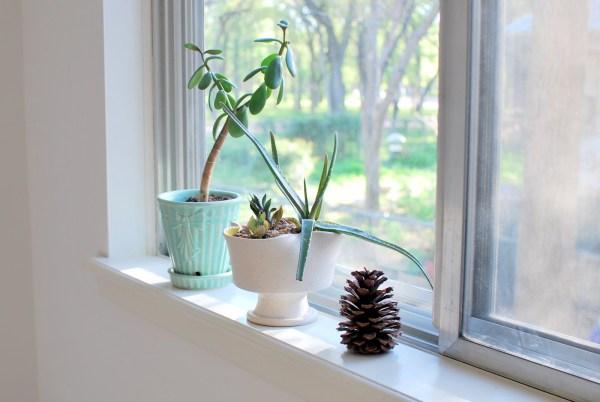 Windowsill Love - Elsieisy