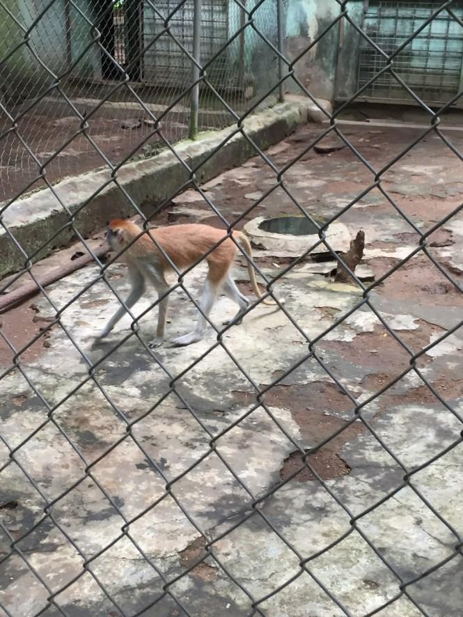 Monkey in Agodi Gardens mini zoo - elsieisy blog - elsie Godwin Travel blogger