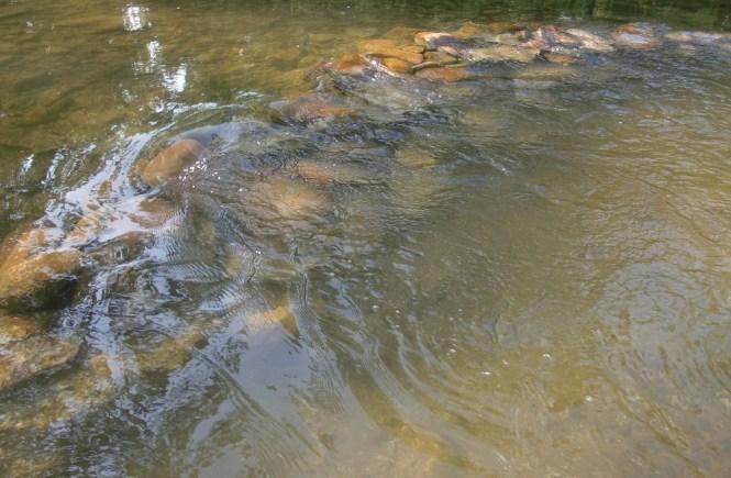 river - elsieisy blog