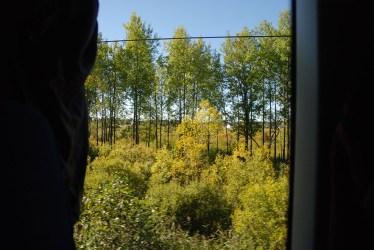 Trein Sint Petersburg naar Moskou uitzicht