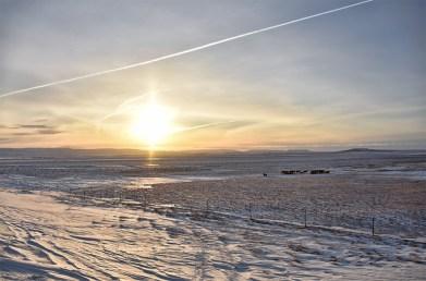 Paarden in de sneeuw in Zuidland IJsland bij zonsopkomst