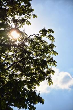 Zonnig weer in het Noorderplantsoen Groningen