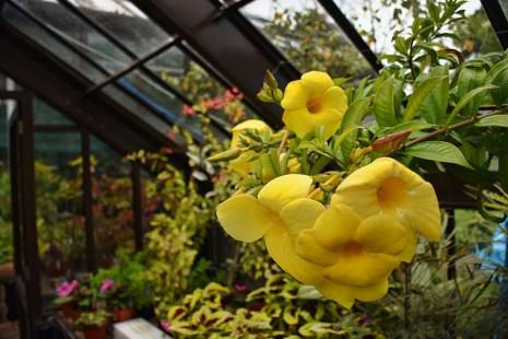 Bloemen in de botanische tuinen Glasgow kassen