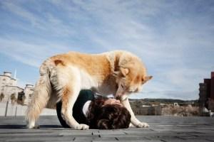 perro cariñoso sobre su amiga