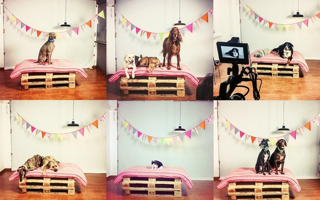 Fotógrafo de mascotas Video «Feliz Navidad» Parte2
