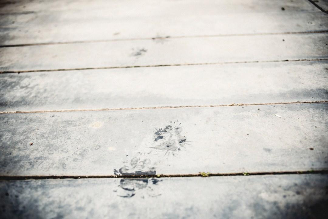 huellas de perros en el asfalto