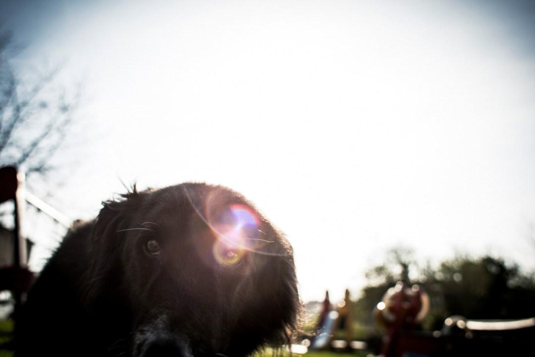 004_fotografia-mascotas_els-magnifics_vulcano-olot-trico