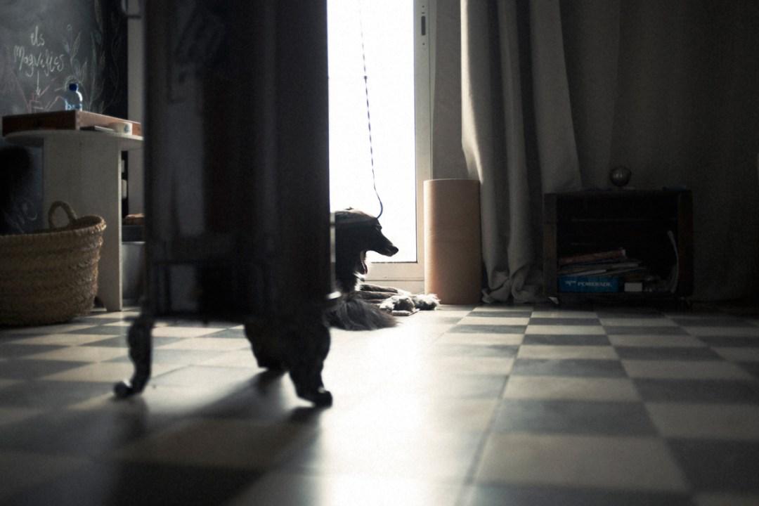 006_fotografia-mascotas_els-magnifics_vulcano-olot-trico