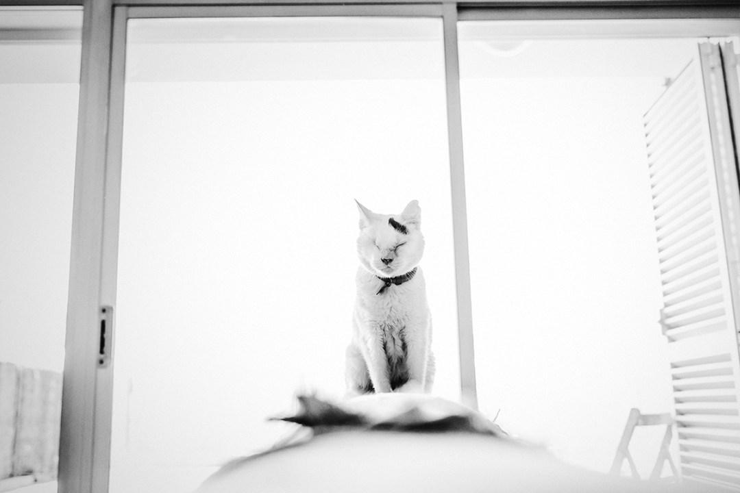 gato tuerto sentado en el sofá 1