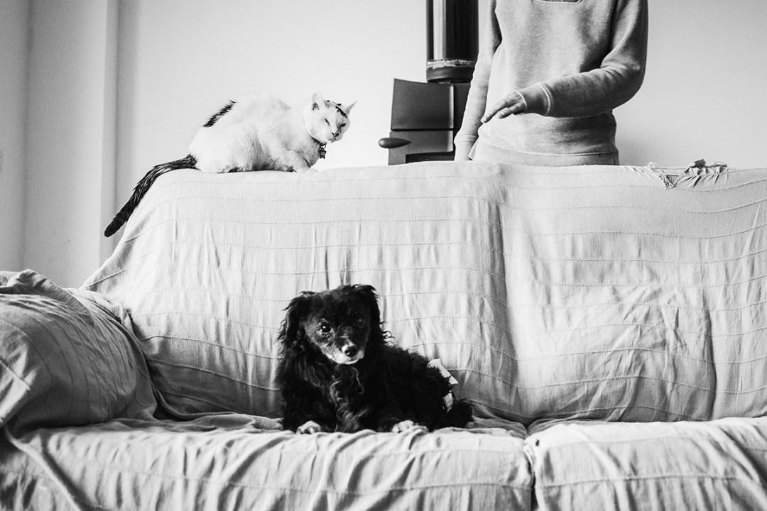 chica con su gato en el sofá, el perro mira a cámara