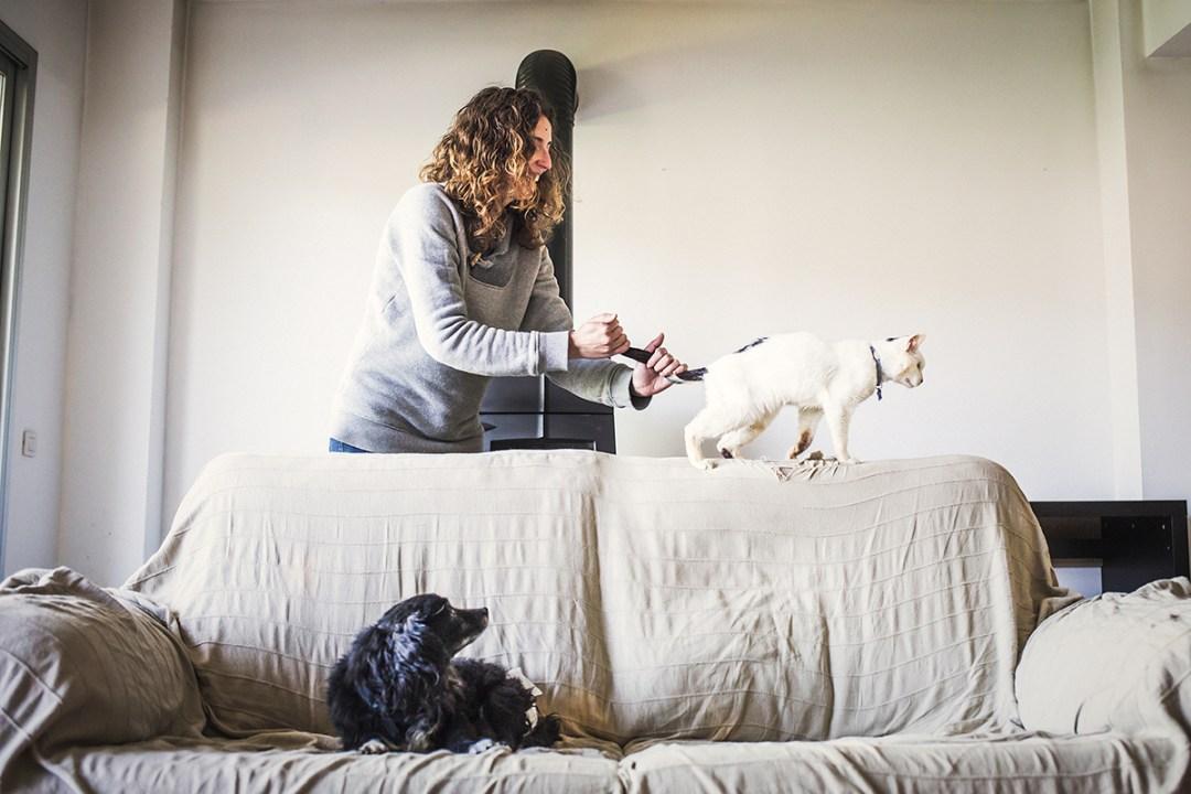 chica con su gato en el sofá, el perro mira