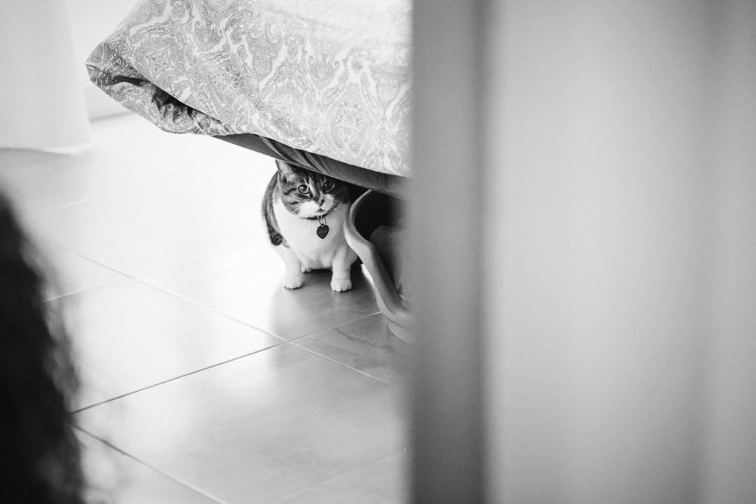034a_fotografia-mascotas_elsmagnifics_veggieHOME