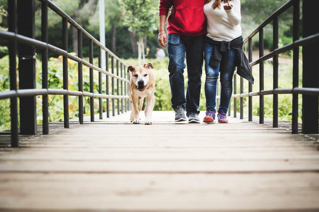 reportaje de perro PPP American Stanford y su familia paseando