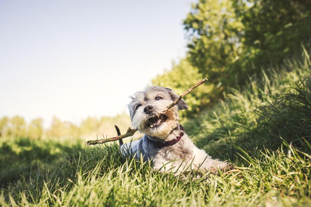 007_reportaje de mascotas_elsmagnifics_Estany Banyoles