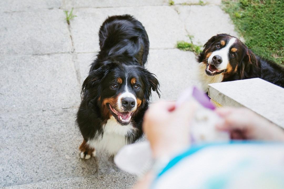 fotografo de mascotas 005-elsmagnifics-MuffinIzoku