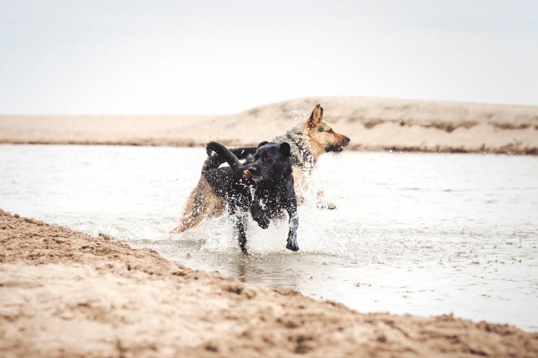 fotografo de mascotas 005_elsmagnifics-OdieDex