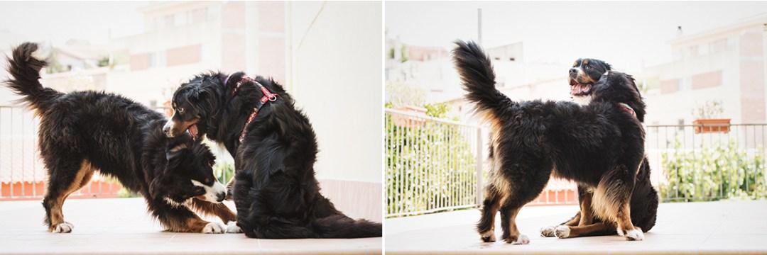 fotografo de mascotas 016b-elsmagnifics-MuffinIzoku