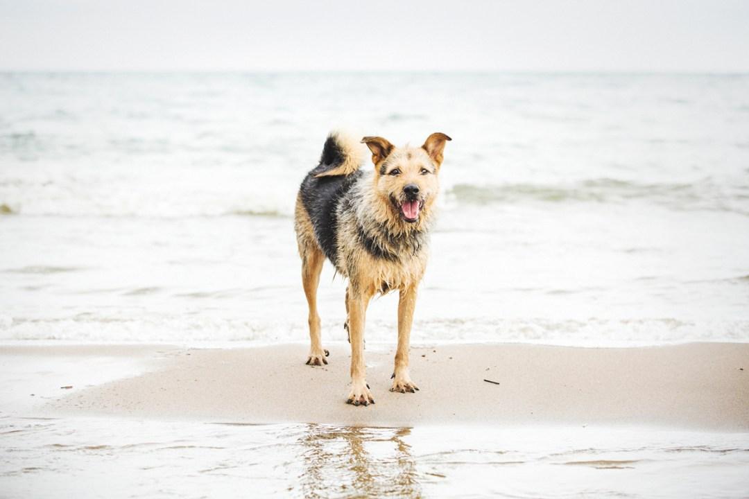 fotografo de mascotas 020_elsmagnifics-OdieDex