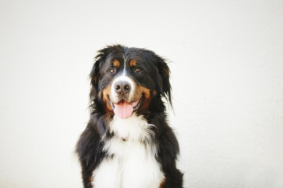 fotografo de mascotas 025-elsmagnifics-MuffinIzoku