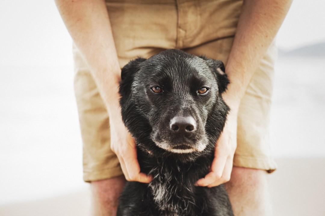 fotografo de mascotas 035_elsmagnifics-OdieDex