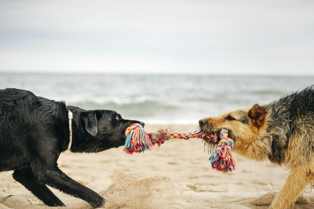 fotografo de mascotas 040_elsmagnifics-OdieDex
